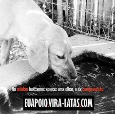 De amor a um vira-lata.   Todos os animais têm direito de viver bem e com dignidade. Naão compre, adote!  www.vira-latas.com