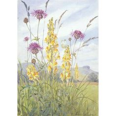 Margaret Tarrant - Yellow Toadflax