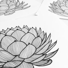 Textile & Wallpaper Designer Patricia Braune's original illustrations of her exclusive wallpaper collection for WYNIL. #blackandwhite #penonpaper #originaldrawing #canadianginger #agave #succulent