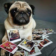 Pinned With Love To Pug A Pug #pugs