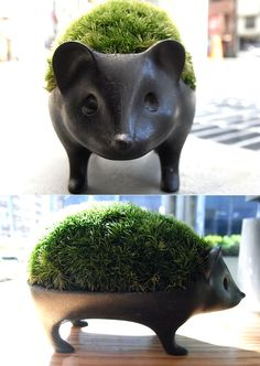 反則的なかわいさの、ハリネズミ苔盆栽。 | Good items Animal Design, Bonsai, Hedgehog, Planter Pots, Bronze, Ceramics, Japan Style, Global Market, Naver