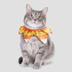 Candy Corn Costume, Candy Costumes, Pet Halloween Costumes, Pet Costumes, Dog Halloween, Halloween Images, Halloween 2020, Happy Halloween, Cute Baby Cats