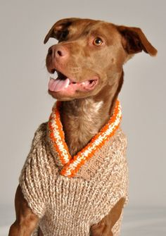 Chilly Dog Tan Camp Dog Sweater | Pup Life Dogs in Clothes #dogsinclothes Doggie Clothing #Puppy #Dog