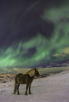 Blog: Top 30 Captures of the Northern Lights in Iceland: The Sky is Alive!