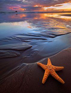 No abandones tu estrella...