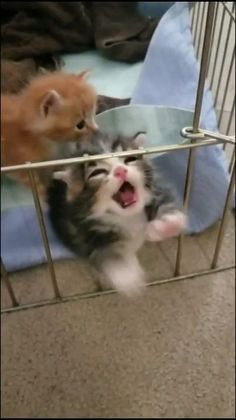 Funny Cute Cats, Cute Baby Cats, Cute Funny Animals, Kittens Cutest, Cats And Kittens, Cute Dogs, Cute Babies, Cute Wild Animals, Cute Little Animals