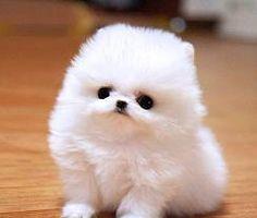 haha,parece mais um gato do que cachorro! Muito fofo!
