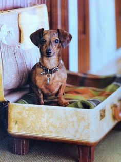 Just be sure the lid does not close on your pup :)  15 Ideas for DIY Pet Bed