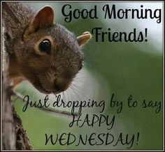 Enjoy your Wednesday. Wednesday Hump Day, Good Morning Wednesday, Wednesday Humor, Good Morning Post, Good Morning Happy, Good Morning Friends, Morning Wish, Good Morning Quotes, Happy Sunday