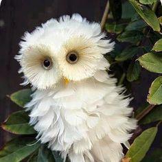 Cool Owl Cute Ladybird - Google+