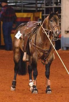 Mr Gold Bucks - 1998 Dun Stallion - He knows his job and he's doing it well!