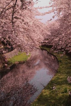 Hanami Yama Park in Fukushima city, Japan. / sfgirlbybay