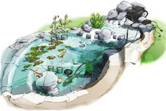 Le jardin aquatique - botanic®