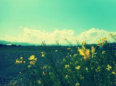 花のある田園風景。