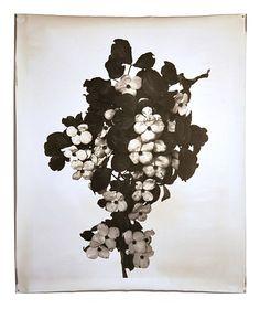 Jeff Cowen, Nature morte 18 (2012)
