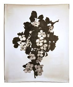 Jeff Cowen, Nature morte 18 (2012)