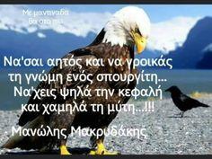Crete, Bald Eagle, Quotes, Quotations, Quote, Shut Up Quotes