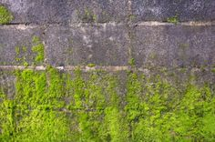 If you have problems with moss, here are several solutions to removing it safely. Concrete Bricks, Concrete Patio, Concrete Wall, Patio Blocks, Retaining Wall Blocks, Moss Removal, Brick Sidewalk, Weeds In Lawn, Window Well