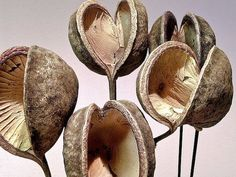 you could also group smaller dried seed pods. They come in a variety of shapes. most have all natural tones Planting Seeds, Planting Flowers, Do It Yourself Wedding, Organic Shapes, Organic Patterns, Organic Art, Seed Pods, Patterns In Nature, Natural Forms