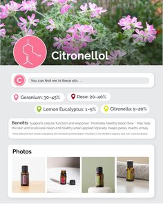 Geranium Essential Oil, Essential Oil Uses, Lemon Eucalyptus, Citronella, Geraniums, Benefit, Lemon Grass