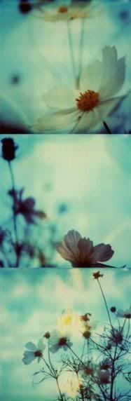 Lomo flowers