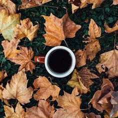 Coffee mug with coffee on grass with fallen leaves. Autumn Leaves, Fallen Leaves, Coffee Pictures, Grass, Coffee Mugs, Tableware, Fall Leaves, Herb, Dinnerware