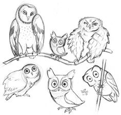 458 best owl sketches images tattoo owl drawings body art tattoos Penguin Pencil Drawings owl sketches