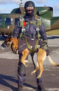 The Belgian Malinois is preferred for the Navy SEAL teams as because they are more compact than German Shepherds and do better in tandem parachute jumping.