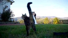These cats had perfect timing in creating some amazing photobombs.