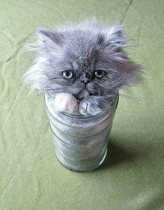 Kissat ovat mestareita ahtautumaan eri paikkoihin – Katso hauskat kuvat! | Vivas
