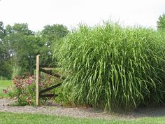 ornamental grasses landscaping | Landscaping - The Alternative Landscape Company