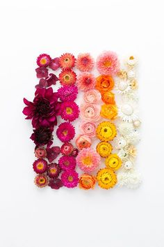 ombre of flowers