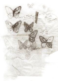 ~ butterfly sketches