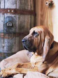 Do you love any of these classic sad dog movies? Do you love any of these classic sad dog movies? The Bloodhound Gang, Bloodhound Puppies, Labrador Puppies, Retriever Puppies, Corgi Puppies, Labrador Retriever, Saint Hubert Chien, Big Dogs, Dogs And Puppies