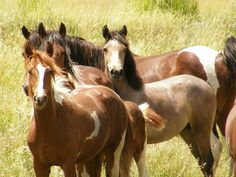 America's wild horse population is at risk of mass slaughter, as the House Rules Committee rejected amendments that would protect them. Demand that the Senate stand strong against horse slaughter and prevent wild horses and burros from being sold and killed.