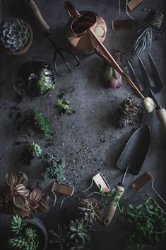 for the cook, gardner, and crafter - Local Milk Gardening Photography, Local Milk, Plant Projects, Flat Lay Photography, Product Photography, Plant Care, Garden Inspiration, Garden Landscaping, Garden Tools