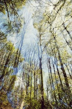 Teutoburger Wald | Nadja Jacke Photography