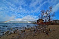 Rainbow by Kevin Choi