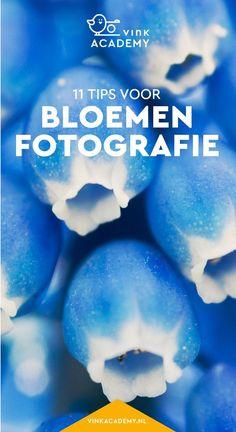 Fotografietips Nederlands: bloemen fotograferen, zoals tulpen, blauwe druifjes, rozen en margrieten. Tips voor camera-instellingen bij bloemenfotografie, met welke lenzen en objectieven je bloemen het beste fotografeert, welk standpunt, hoe het zit met ma