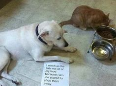 Poor hungry dog.