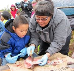 My sister Diana Ramoth of Selawik teaching students how to cut and preserve fish.