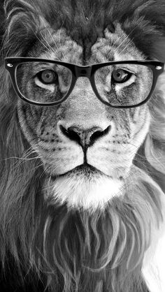 An African Male Lion Looking Very Distinguished and Classy. Lion Images, Lion Pictures, Lion King Art, Lion Art, Lion Wallpaper, Animal Wallpaper, Animals And Pets, Funny Animals, Cute Animals