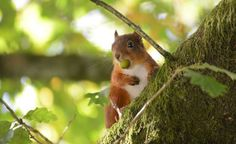 The best places in Cumbria to spot wildlife