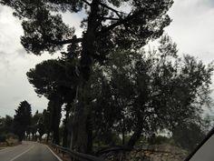 Macchina, Polignano a Mare→Castellana Grotte, Italia (Luglio)