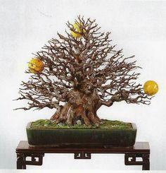 Foto de @Akio Kanai. #bonsai #pseudocidonia