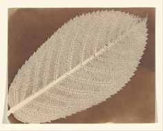 William Henry Fox Talbot, Leaf