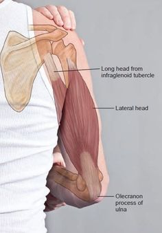 Human Anatomy For Artists, Human Body Anatomy, Muscle Anatomy, Body Therapy, Hand Therapy, Massage Therapy, Massage Tips, Massage Techniques, Shoulder Anatomy