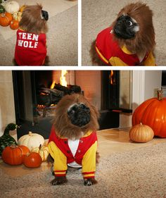 Teen Wolf dog costume. Hilarious!!