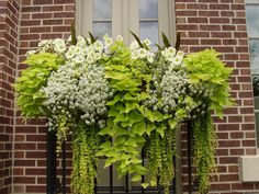 Pretty combo for a flower box.looks like potato vines, creeping jenny, maybe bacopa or verbena then some wave petunias on the top. Window Boxes, Plants, Potato Vines, Outdoor Gardens, Garden Inspiration, Planters, Shade Plants, Container Gardening, Garden Containers