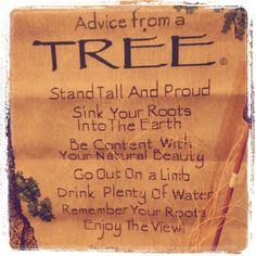Advice from a TREE ~ Stand tall and proud; sink your roots into the earth; be content with your natural beauty; go out on a limb, drink plenty of water; remember your roots; enjoy the view.